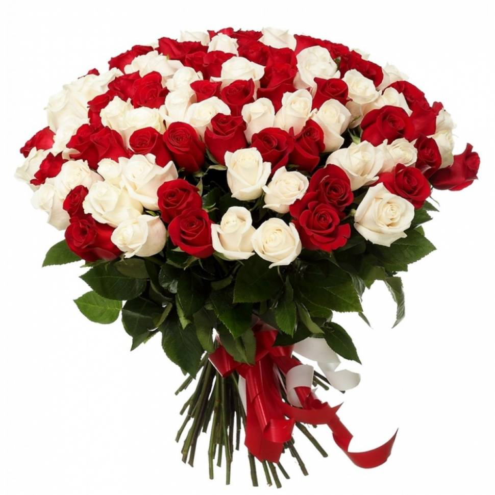 101 бело-красная розаРозы<br><br>