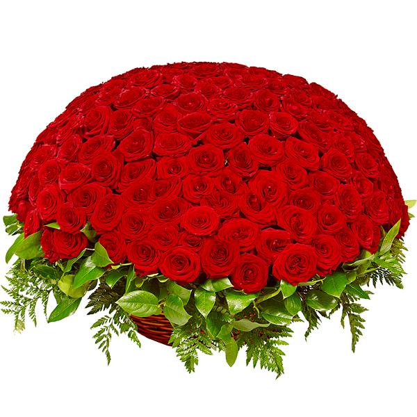 К твоим ногам (251 роза)Корзины с цветами<br>251 одна красная или белая роза в стильной корзинке выглядит просто ошеломляюще.<br>Розы с трудом вмещаются в огромную корзину и со стороны это выглядят как<br>громадная цветочная полусфера. Красные розы выражают любовь, страсть и<br>преданность. Подарив корзину из множества красных цветов, вы отлично<br>передадите искренность извинений или напомните о своей любви.<br>
