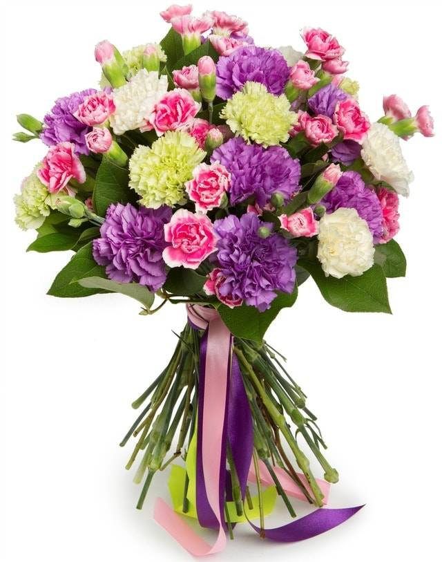 ГвоздикаГвоздики<br>Основным цветком в этом букете является гвоздика. Она символизирует очарование и помогает выразить с помощью такой композиции нежные чувства и увлеченность. Использование при создании букета только гвоздик разных видов и цветов делает его очень оригинальным, ярким и привлекательным. В нем присутствуют нежные белые, насыщенные фиолетовые, яркие желтые и изысканные розовые гвоздики. Благодаря этому он непременно порадует получателя и подарит ему множество положительных эмоций и море эстетического наслаждения.<br>