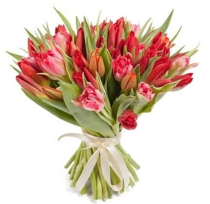 Алое солнцеТюльпаны<br>21 красный тюльпан, перевязанный лентой, представляет собой шикарную<br>композицию «Алое солнце». Красный цвет означает пылкую любовь, страсть и<br>значимость. Такой букет идеально подойдет для подарка любимой женщине.<br>Но и друзья или коллеги непременно обрадуются изысканным цветам,<br>тюльпаны источают шикарный запах, который поведет за собой к природе.<br>