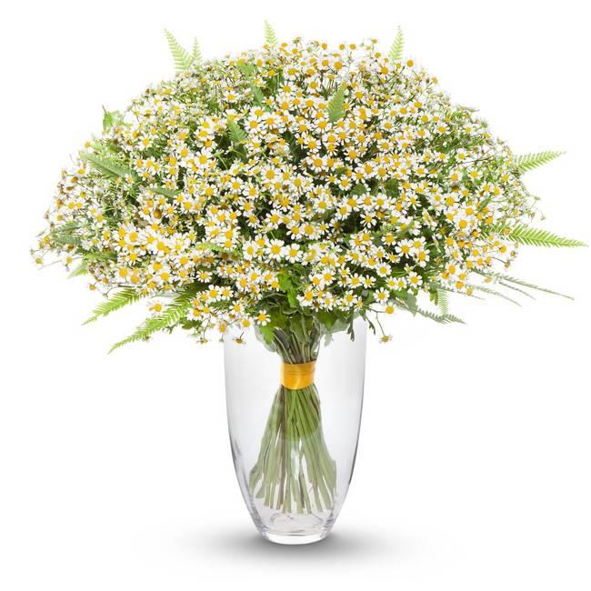 ПолевойРомашки<br>Букет состоит из полевых ромашек, универсальных красивых цветов, которые<br>можно подарить как любимой девушке, так и коллеге. Белый цвет лепестков<br>символизирует искренность и чистоту намерений. «Полевой» букет из ромашек<br>– приятный жест для небезразличных вам людей. Запах поля окутает, унося к<br>природе, в мир душевного равновесия и отличного настроения.<br>