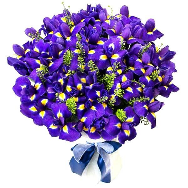 51 ирисИрисы<br>Этот букет – яркий пример внушительного вида ирисов. 51 темно-синий цветок<br>выглядит очень презентабельно. Между ирисами в букете проглядывается<br>зелень, которая придает композиции свежести и сближает с природой. Ирисы<br>подходят для подарка членам семьи или важному в жизни мужчине, выражают<br>доверие, искренность и дружбу и оставят незабываемый след в памяти.<br>