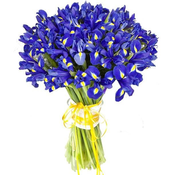 Синий шарикИрисы<br>Букет «Синий шарик» отлично показывает, насколько красивыми могут быть<br>ирисы, особенно, если их крайне много. 75 темно-синих цветов смотрятся<br>поражающе вместе и могут быть подарены кому угодно. Ирисы – цветы<br>универсальные, показывают искренность, доверие и отсутствие корысти,<br>подходят для любого повода коллегам, друзьям или родственникам.<br>