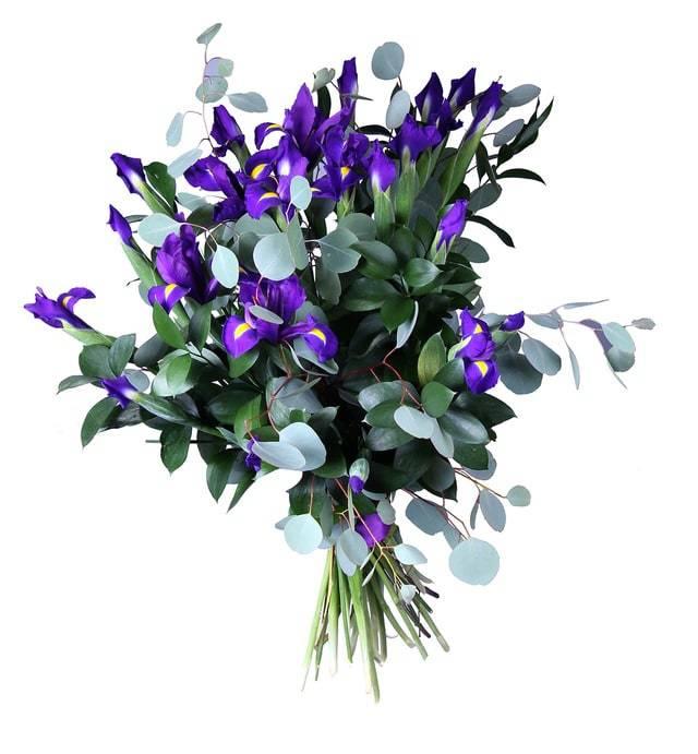 ФантазерИрисы<br>Букет «Фантазер» выполнен в темных тонах, тут к фиолетовым ирисам<br>добавлен темно-зеленый эвкалипт. Такое сочетание способно порадовать<br>любого человека. Ирисы на языке цветов означают искренность, верность и<br>хорошее отношение. Отлично подойдут как приятный жест для друга или<br>поздравление коллеге. Букет поможет подарить яркие эмоции и выразить<br>уважение.<br>