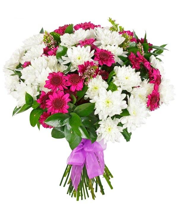 Белая свеклаХризантемы<br>Выразительности букету придает контрастная расцветка – белый и розовый<br>цвета привлекут внимание как мужчины, так и женщины. Цветочная<br>композиция поможет выразить уважение коллеге и старшему другу, извиниться<br>перед любимой женщиной. Хризантемы также раскроют чувство доверия и<br>благодарности, радуя своей красотой и нежностью на протяжении долгого<br>времени.<br>